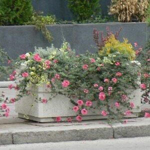 jardiniera-umm644