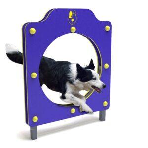echilibru, psihomotricitate, abilitate și ascultare a câinelui.